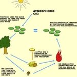 Firewood CO2 cycle